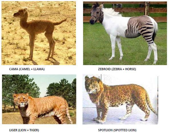 strange-animals